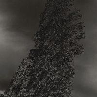 Alfred-Stieglitz-22