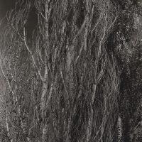 Alfred-Stieglitz-36