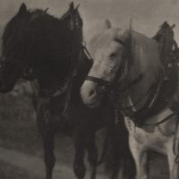 Alfred-Stieglitz-69