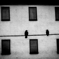 Alicja-Brodowicz-Phatic-Communion-7