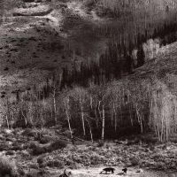 Ranch02